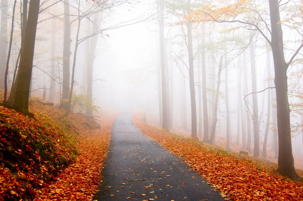 Hiking trail in autumn with changing leaves