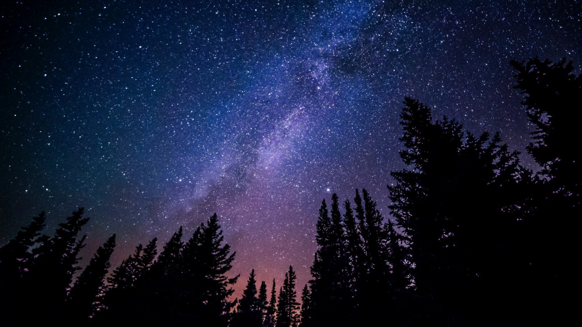 Night sky full of stars above a canopy of trees.